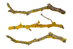 Macro dry tree branches isolated on white background, texture. Macro dry tree branches covered with lichen Stock Photos