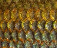 Macro of an Eastern Rainbowfish skin Stock Image