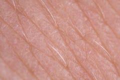 Macro eccellente di struttura della pelle immagini stock