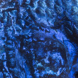 Macro of an Electric Blue Hap skin Stock Photography