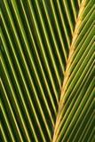 Macro em folha de palmeira Fotografia de Stock