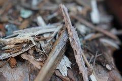 Macro en bois Photographie stock libre de droits