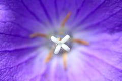 Macro en la estructura reproductiva de la flor Fotografía de archivo libre de regalías