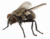 Macro en mosca fotografía de archivo