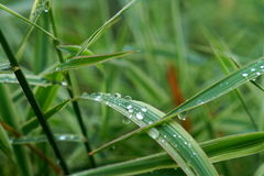 Macro erba verde chiaro Fotografie Stock