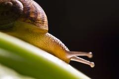 Macro escargot Photo stock