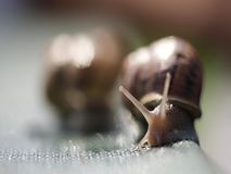 Macro escargots de tir clips vidéos