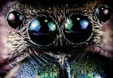 Macro estrema degli occhi dei ragni Fotografia Stock