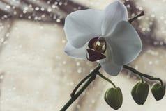 Macro et en gros plan photos d'orchidée images libres de droits