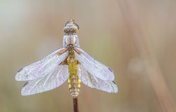 Macro et rosée de libellule Image libre de droits