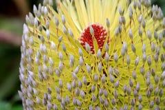 Macro exótica de la flor Fotografía de archivo