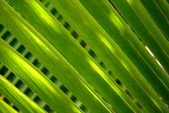 Macro of exotic plant leaf Royalty Free Stock Image