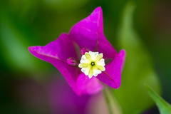 Macro exotique pourpre de fleur Photographie stock libre de droits