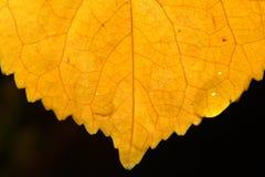 Macro extrema de la hoja del otoño imagen de archivo