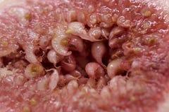 Macro extrema del higo Imagen de archivo
