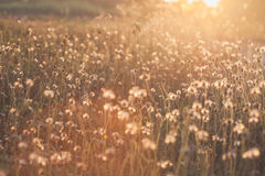 Macro with extremely shallow DOF of Grass flower in pastel Stock Photography