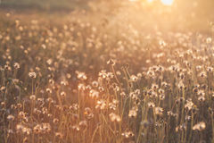 Macro with extremely shallow DOF of Grass flower in pastel Royalty Free Stock Photo