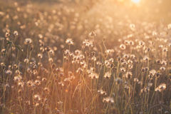 Macro with extremely shallow DOF of Grass flower in pastel Royalty Free Stock Images