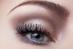 Macro eye with fashion light make-up, long eyelashes, eyebrows Royalty Free Stock Photo