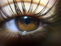 Lashes. Macro eye lashes royalty free stock photography