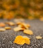 Macro of fallen leaves. On the pavement Royalty Free Stock Photo