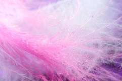 Macro feathers Stock Photo