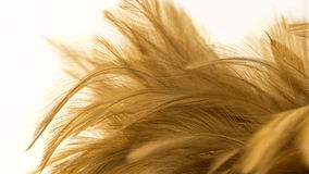 Macro feathers Stock Image