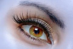 The macro female eye Royalty Free Stock Photos