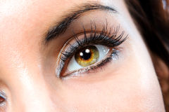 The macro female eye stock photos