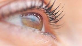Macro femminile dell'occhio di Brown video d archivio