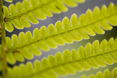 Macro fern leaf closeup floral background Stock Photo