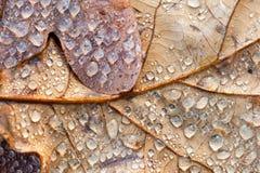 Macro feuille d'automne Photos libres de droits