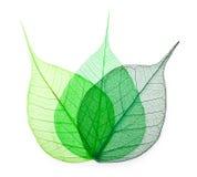 Macro feuilles de vert Photographie stock libre de droits