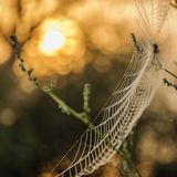 Macro filet d'araignée image libre de droits