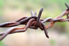 Macro filo spinato Immagine Stock Libera da Diritti