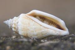 Macro fin de photo d'escargot  Photos libres de droits