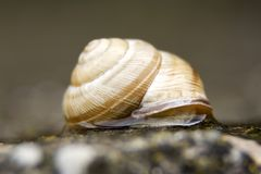 Macro fin de photo d'escargot  image libre de droits