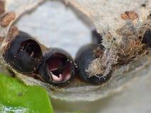 Macro fin tirée de quelques oeufs hachés d'insectes en Web trouvé dans le jardin, photo rentrée le R-U photographie stock