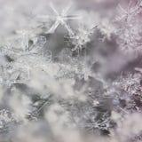 Macro fiocchi di neve reali Fotografia Stock