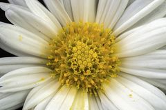Macro fiore Fotografia Stock