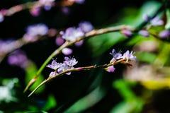 Macro fiore Immagini Stock Libere da Diritti