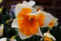 Macro fiore Fotografie Stock