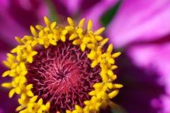 Macro fiore alla luce solare immagini stock