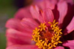 Macro fiore alla luce solare fotografie stock