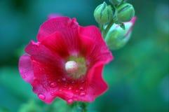 Macro fiore rosa Fotografia Stock Libera da Diritti
