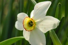 Macro fiori alla molla immagini stock