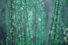 macro fiori verdi molli Immagine Stock Libera da Diritti