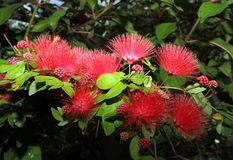 Macro fioritura del fiore immagini stock libere da diritti