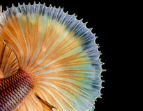 Macro fish tail. On black background Stock Images