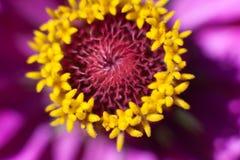 Macro fleur à la lumière du soleil photographie stock libre de droits